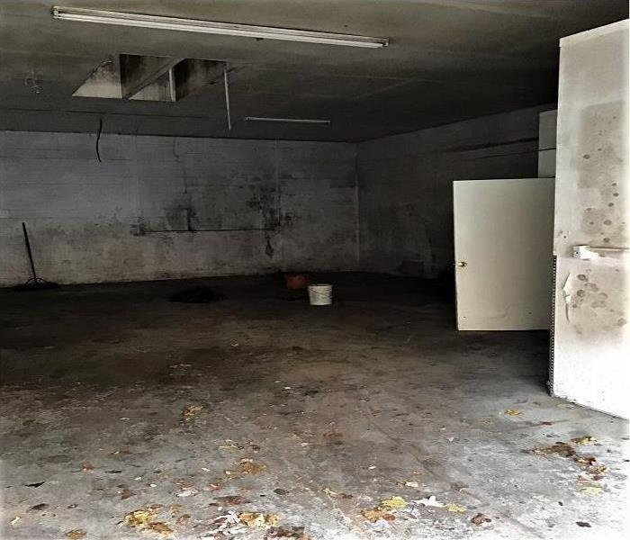 Office spaces covered in mold damage